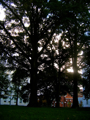 Noble Oaks on Raleigh Capitol Grounds