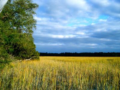 Savannah Marshlands